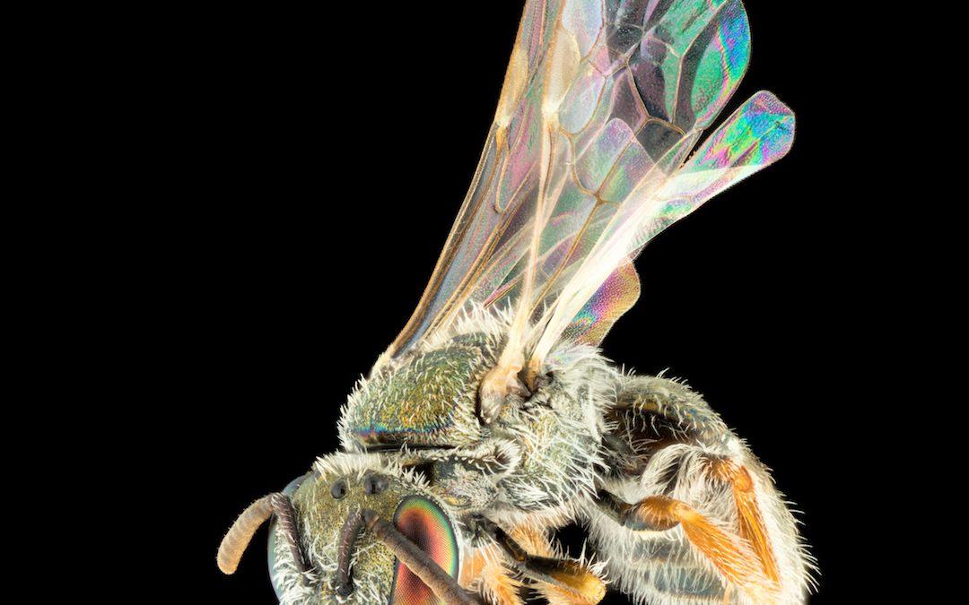 James Dorey – Playford Trust PhD scholar releases new book on Bees